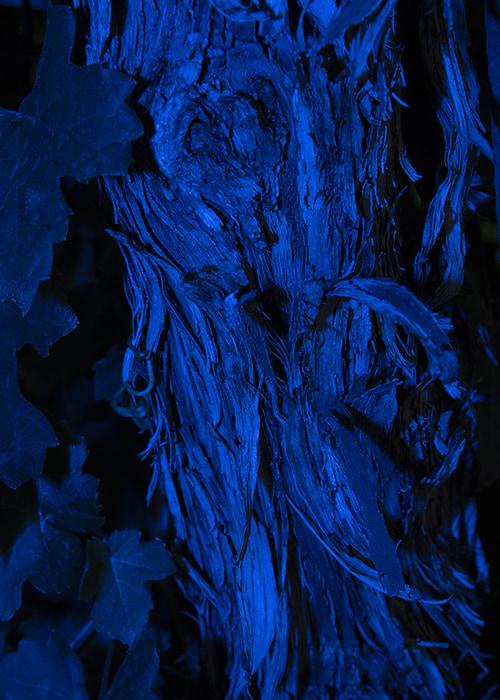 Lara Sapper. Monochromatic - A flash of color