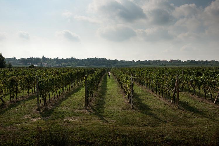 VITE. Spotlight on the world of wine