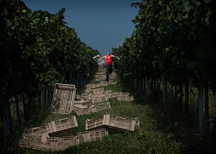 VITE. Il mondo del vino in scena